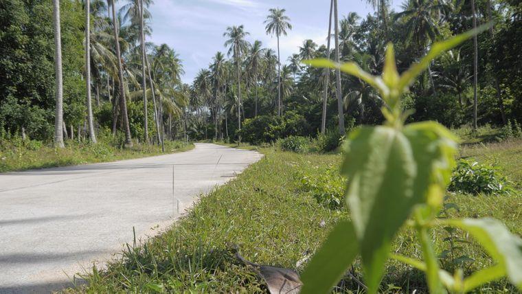 Mitten durch den Dschungel führt diese Strecke an Palmenplantagen und Wasserbüffeln vorbei.