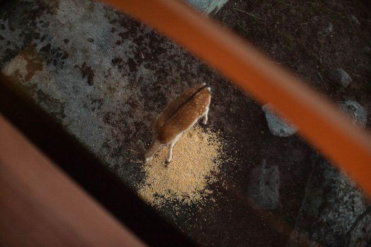 In dem Baumhaus des Eriksberg Hotels und Nature Reserves kannst du wilde Tiere beim Fressen beobachten.