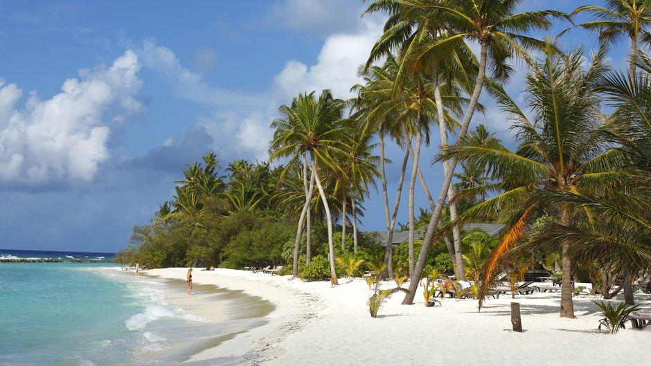 Palmenstrand am Indischen Ozean auf den Malediven.