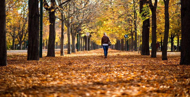 Der Wiener Prater offenbart im Herbst ein wunderbares Farbenspiel, das zu Spaziergängen einlädt.