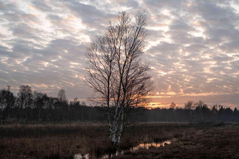 Die Moore des Naturschutzgebietes Stapeler Moors dienten lange Zeit als natürliche Schutzgrenze von Ostfriesland.
