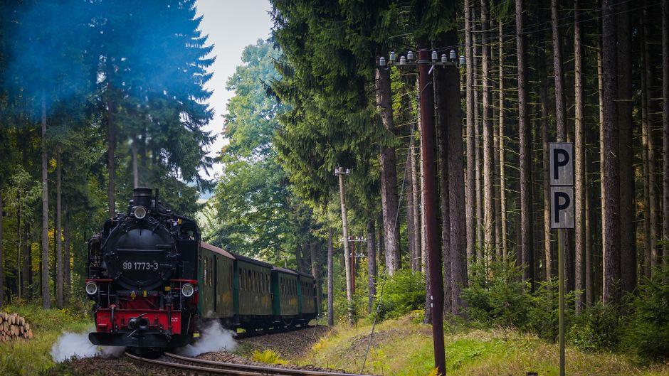 Mit Volldampf tourt die erzgebirgische Fichtelbergbahn durch die Wälder.