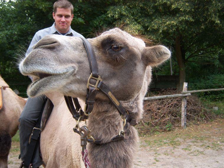 Kamelreiten ist auf dem Fleckschnupphof angesagt.