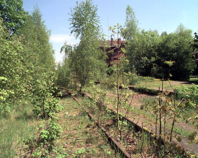 Verlassener Bahndamm im Dransfeld