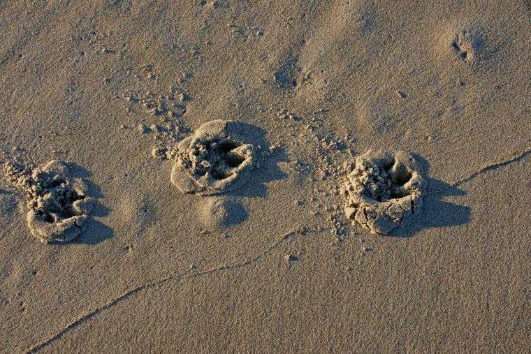 Im besten Fall hinterlassen Hunde nicht mehr als Pfotenabdrücke im Sand.