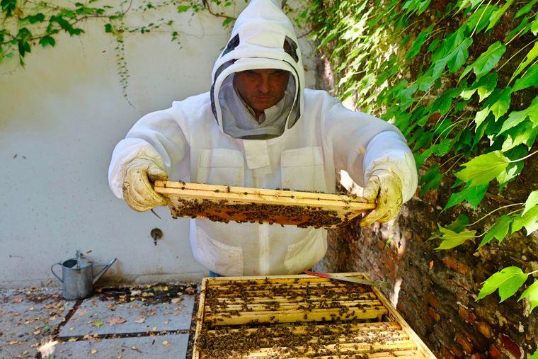 Rik, der König der Stadtbienen