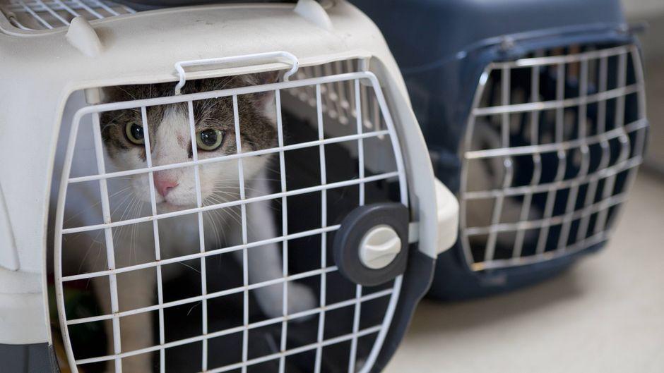 Katze in einer Transportbox.