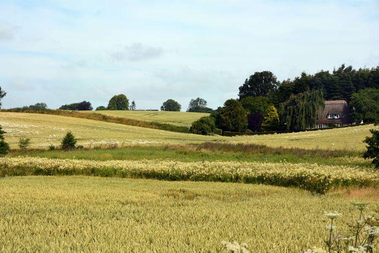 Die Landschaft mit ihren sanften Hügeln und kleinen Wäldchen lädt auch Fahrradreisende und Familien dazu ein, Fünen zu erkunden.