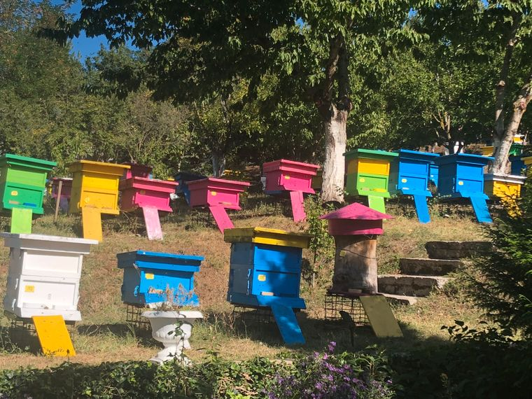 Imkerei am Morava-Gebirge: Die Familie Skermos hofft, ihren Honig irgendwann auch in Europa verkaufen zu können.
