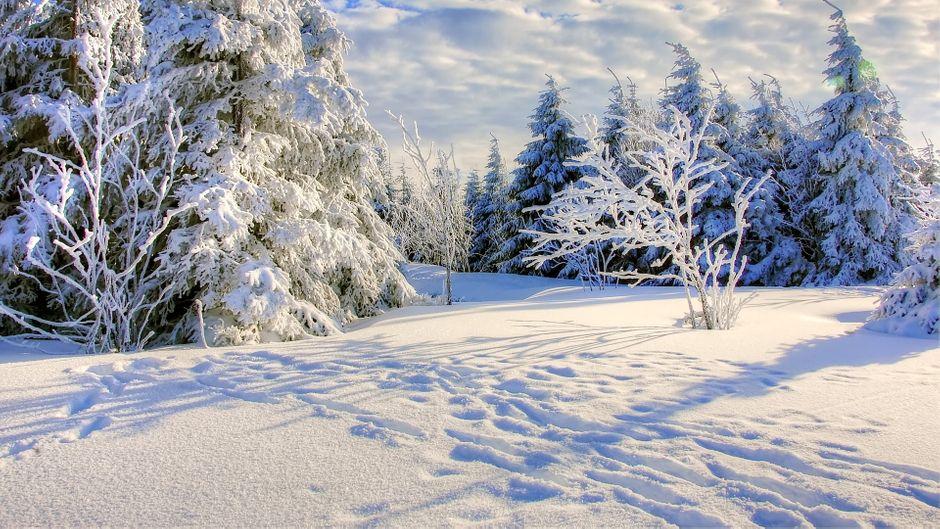Der Winterzauber im Harz