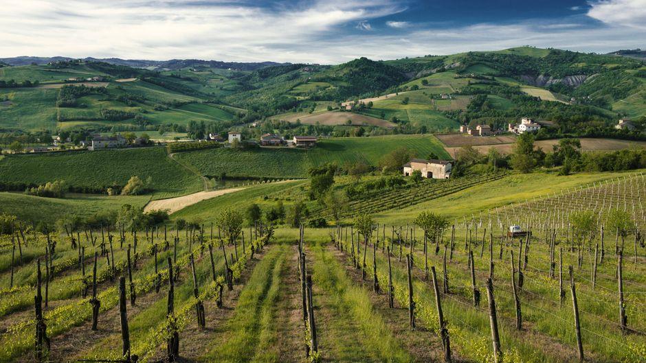 Weinberge bei Castelvetro, Emilia-Romagna, Italien.