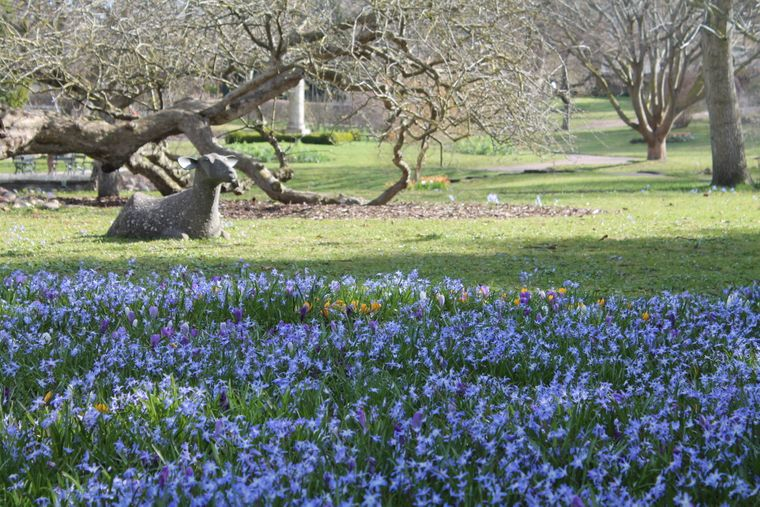 Blühende Blumen im botanischen Garten von Visby, Gotland.