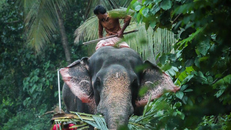 Das Elefantenreiten ist in Thailand auch bei Touristen eine beliebte Attraktion. (Symbolfoto)