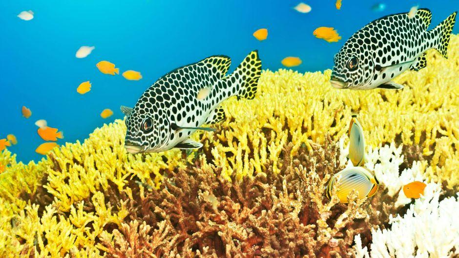 Fische unter Wasser.