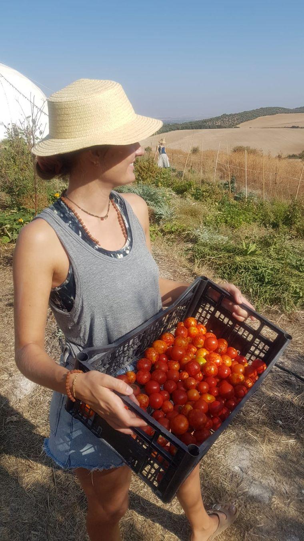 Auf zur Tomatenernte!