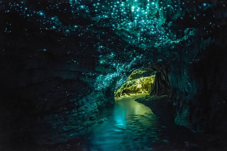 Leuchtende Gloworms in den Waitomo Caves in Neuseeland.