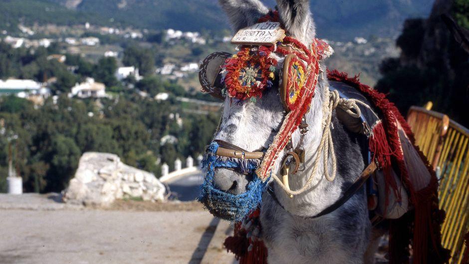 In Mijas hat es Tradition: Die Esel-Taxis sind für viele Touristen ein Must-do.