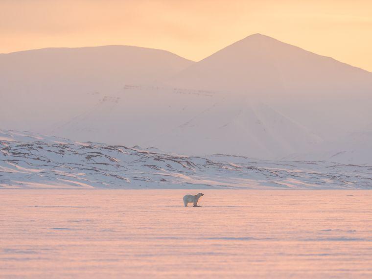 Ein Eisbär in der arktischen Landschaft.
