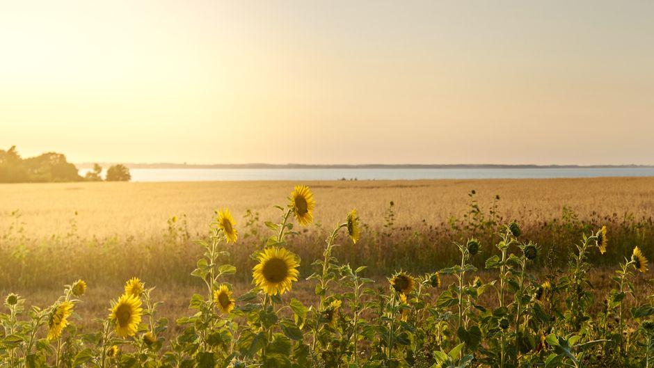 In Schwedeneck zeigt sich die Natur von ihrer schönsten Seite.