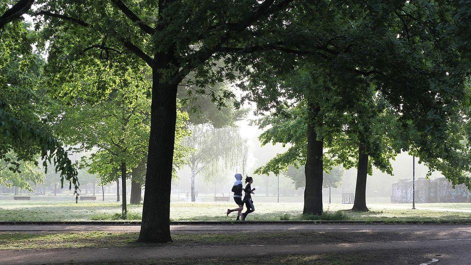 Morgendlicher Lauf im Park.