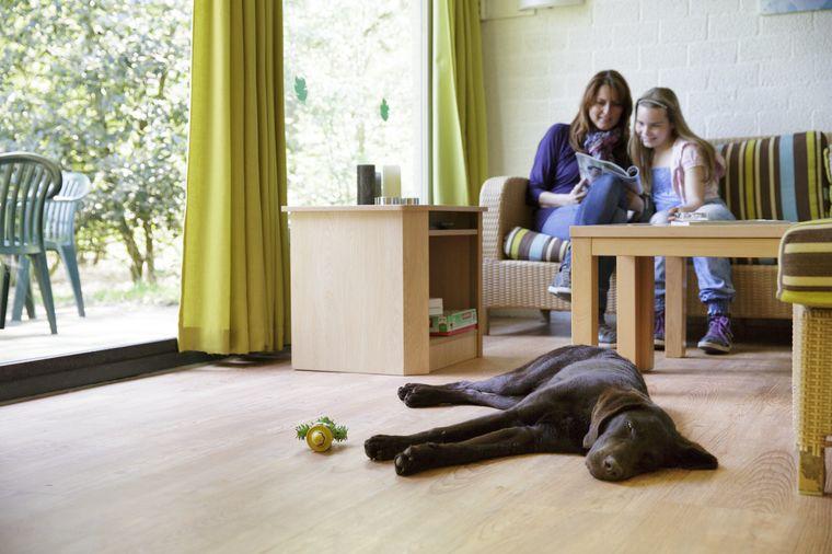 Vorher informieren in welchen Zimmertypen Haustiere erlaubt sind und wohlfühlen!