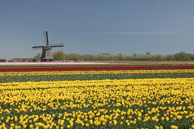 Klar, das sind die Niederlande. Unser Nachbarland ist ein beliebtes Reiseziel – nicht nur wegen der Städte wie Amsterdam und der Nordseeküste, sondern auch wegen der riesigen Tulpenfelder.