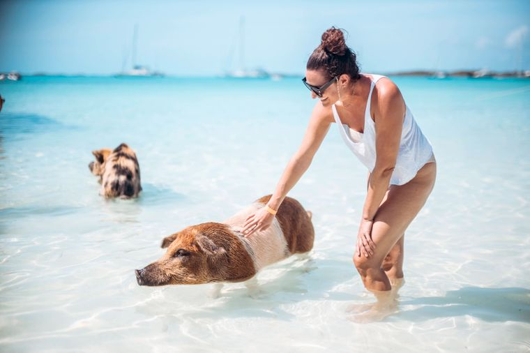 Eine Frau steht auf den Bahamas im Meer und streichelt ein schwimmendes Schwein.