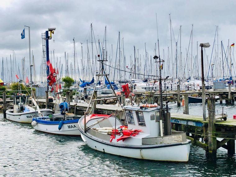 Jachten, Kutter, Motorboote: Der Hafen von Maasholm.