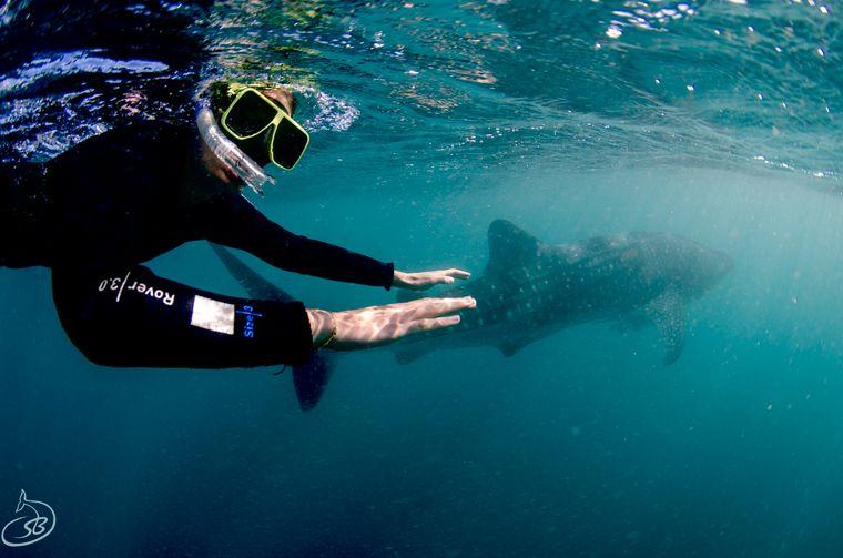 Schnorcheln mit Walhaien, für reisereporterin Kristin ein Muss.