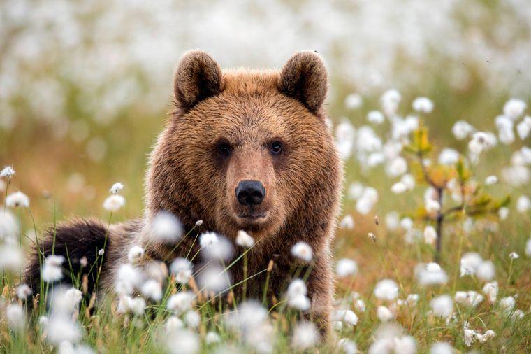 Auf dem bayerischen Gnadenhof bei Hart leben Bären, die vorher im Zirkus auftreten mussten. (Symbolbild)