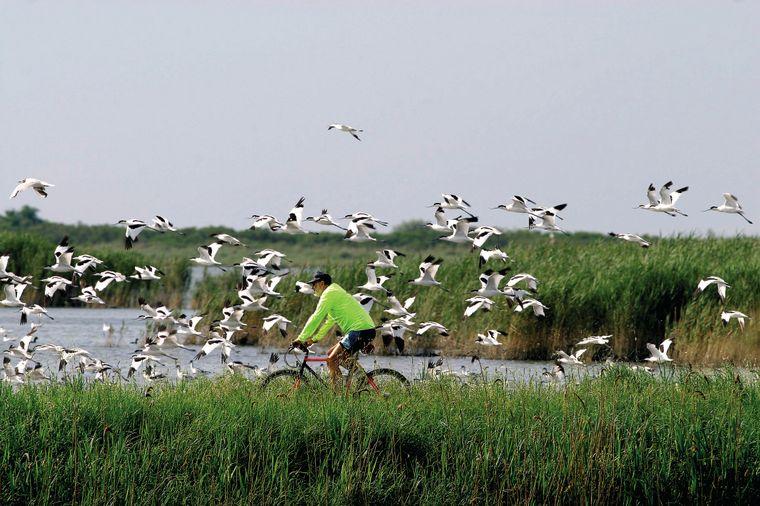 Fahrradfahren, Rafting, Reiten in den Lido di Comacchio in der Emilia Romagna  – die Möglichkeiten für Unternehmungen sind endlos.