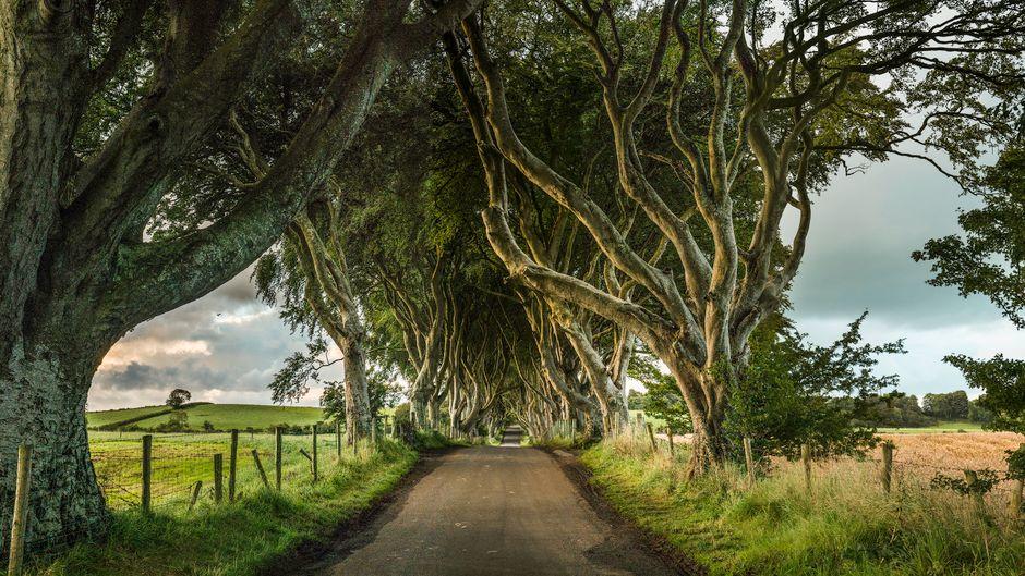 Zu den zahlreichen Drehorten in Nordirland, an denen Aufnahmen gemacht wurden und die heute beliebte Ziele von Reisenden sind, gehören die Dark Hedges, eine Buchenallee.