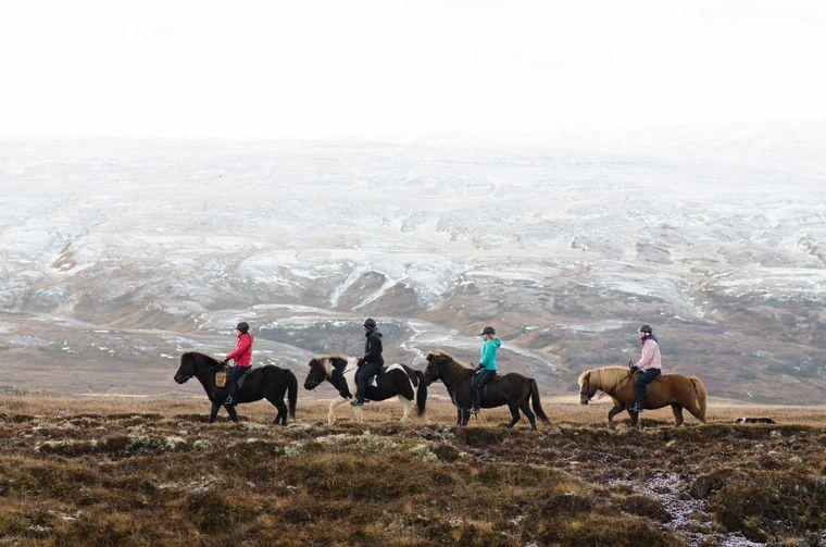 Viele der Touren, die die Eyjardalsá-Farm anbietet, führen entlang des Skjálfandafljót-Fjords.