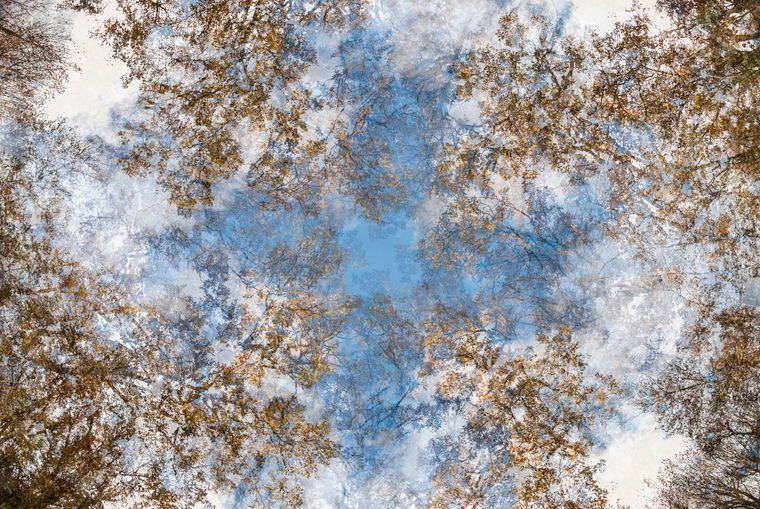 Traum oder Realität? Für Miguel Sánchez García (11 Jahre) aus Spanien beides gleichzeitig. Er fotografierte mehrere Wälder aus einer besonderen Perspektive und gewann damit in der Kategorie der unter 15-Jährigen.