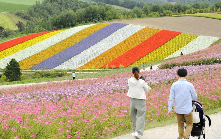 In Hokkaido blühen verschiedene Blumen gleichzeitig und sorgen für ein farbenfrohes Blütenmeer.