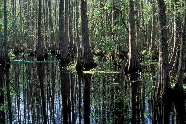 Flora und Fauna des Hammock Nationalparks in Florida sind beeindruckend