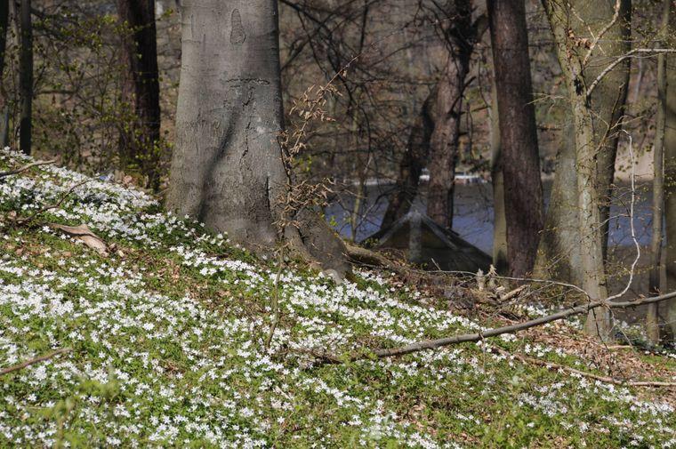 Frühling im Naturpark Uckermärkische Seen in der Nähe von Templin.