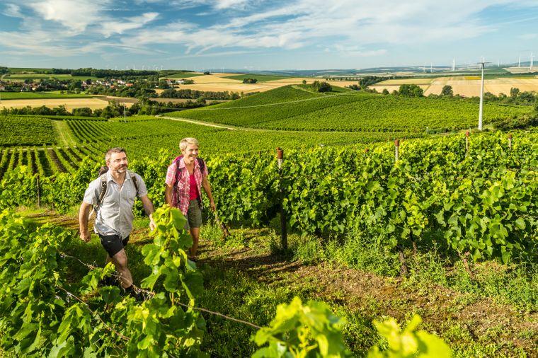 Die Hiwweltour Neuborn führt Wanderinnen und Wanderer in die Weinberge bei Wörrstadt.