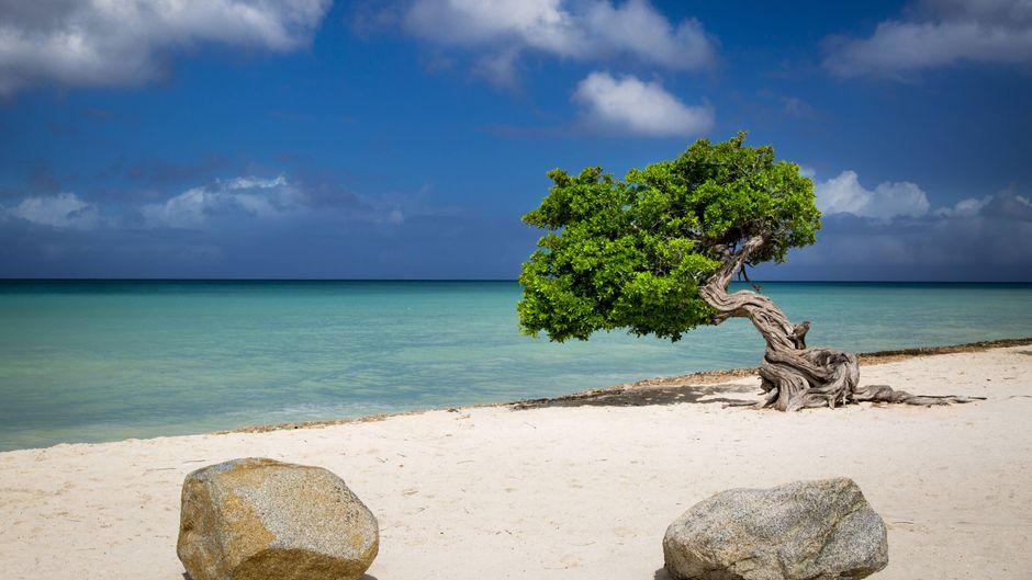 Die Karibik-Insel Aruba bietet wunderschöne Strände.