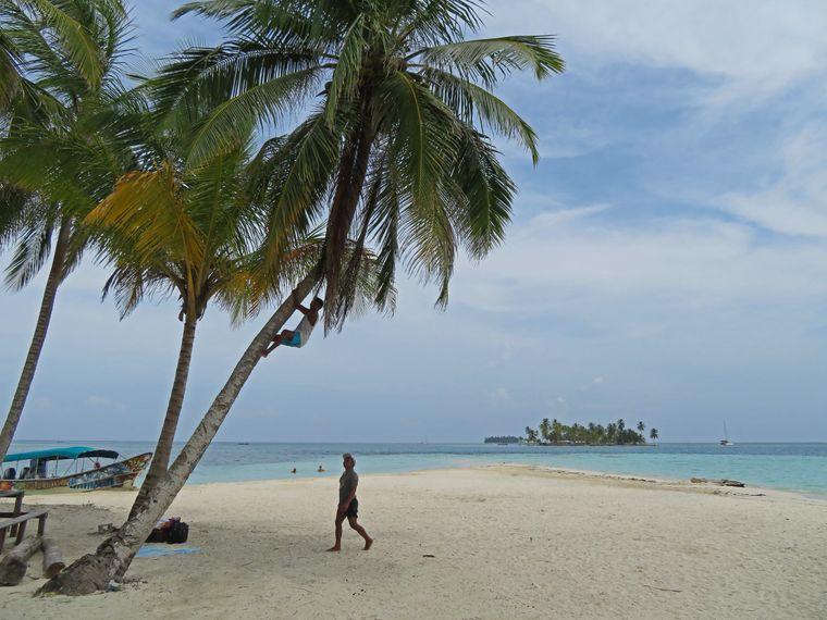 Ein Einheimischer bei der Kokosnussernte.