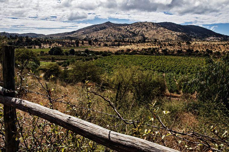 """Das Maule-Tal ist die selbst ernannte """"Wiege des chilenischen Weinbaus""""."""