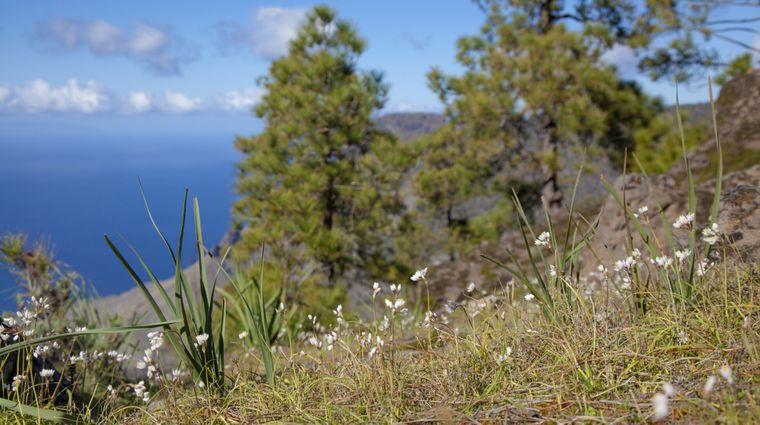 Der Naturpark auf Gran Canaria ist auch im Winter sehr schön.