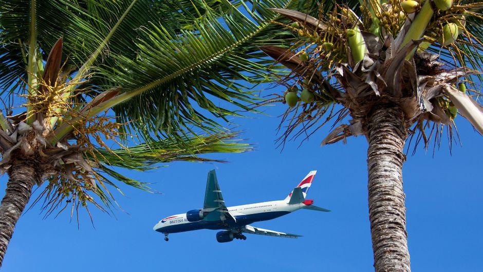 Flugzeug zwischen Palmen