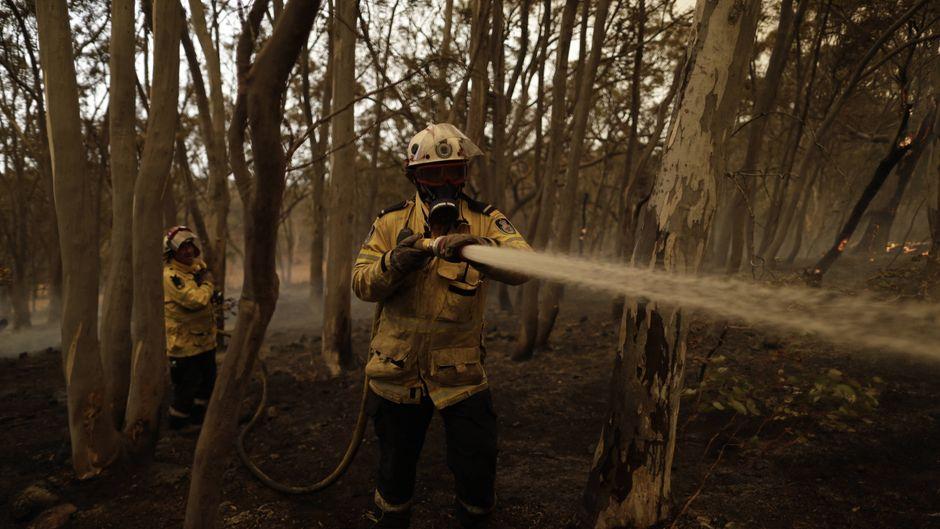 Die Buschbrände in Australien haben Milliarden Tiere das Leben gekostet. (Symbolbild)