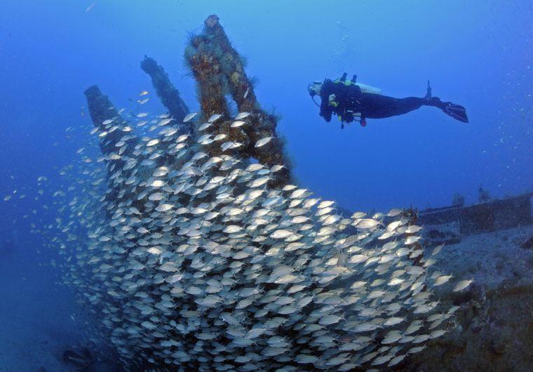 Taucher entdecken Tag für Tag neue Dinge unter Wasser.