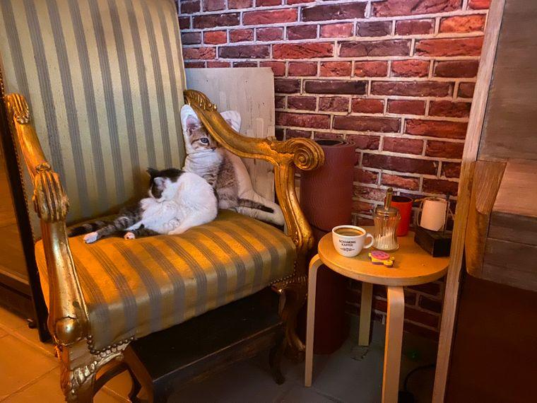 Im Café Schnurrke genießt du leckeren Schamong-Kaffee und Katze Cleo leistet dir Gesellschaft.