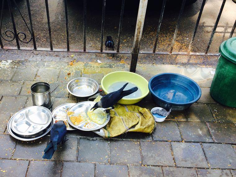 Streetfood-Spülküche: Das Geschirr steht auf dem Boden, das Grobe erledigen die Raben.
