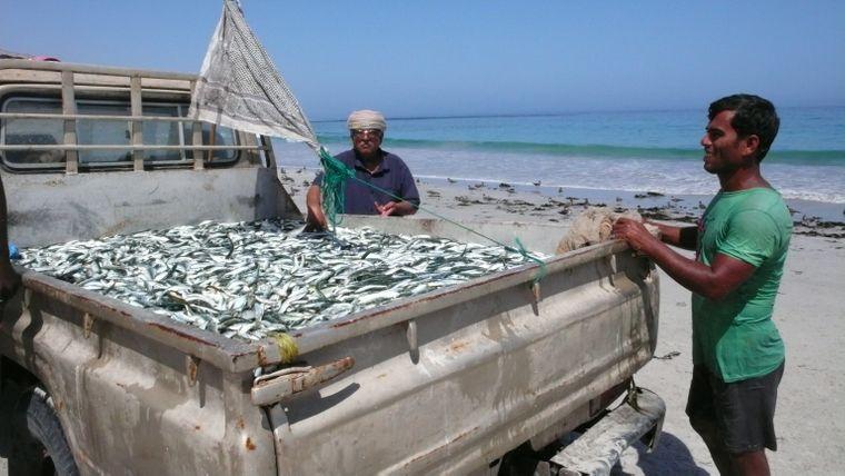 Sardinen auf einem Auto im Oman