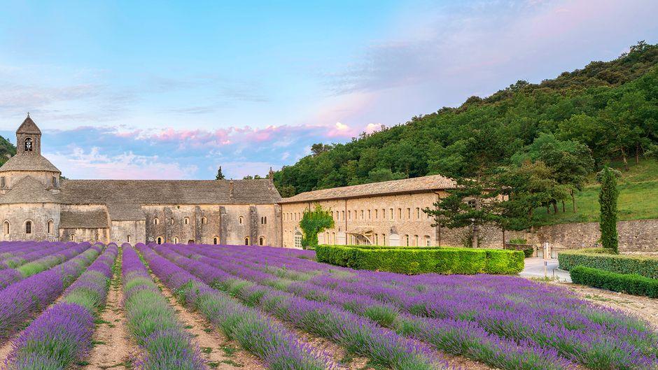Die Abbaye de Sénanque nahe dem Bergdorf Gordes ist wegen der Lavendelfelder, von denen sie umgeben ist, ein beliebtes Fotomotiv. Das Zisterzienserkloster kann aber auch besichtigt werden.