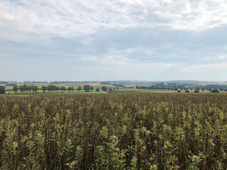 Felder und Wiesen am Rand der Fahrradstrecke.